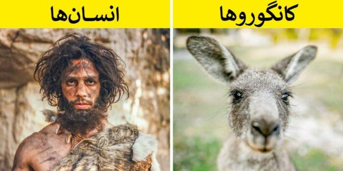 حیواناتی که نمی دانستید با هم خویشاوندند