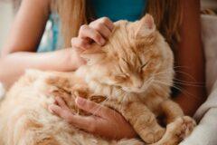 شرایط نگهداری از گربه : بایدها و نبایدهای رفتار با گربهها