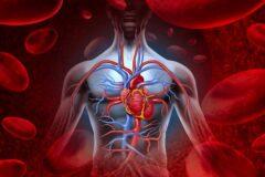 بهترین گزینه های غذایی برای بهبود جریان خون!