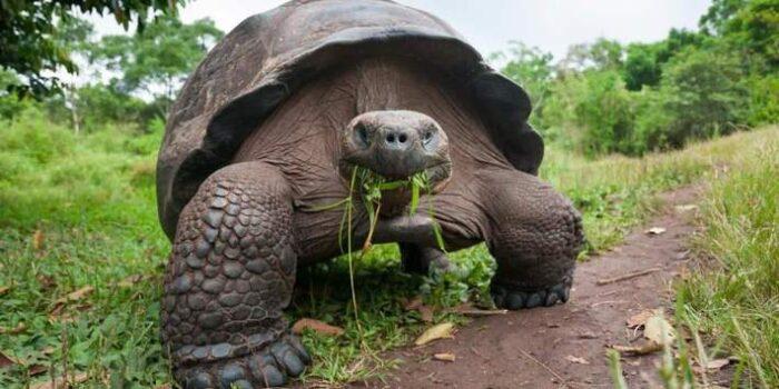 چرا لاکپشتها عمر طولانی دارند؟