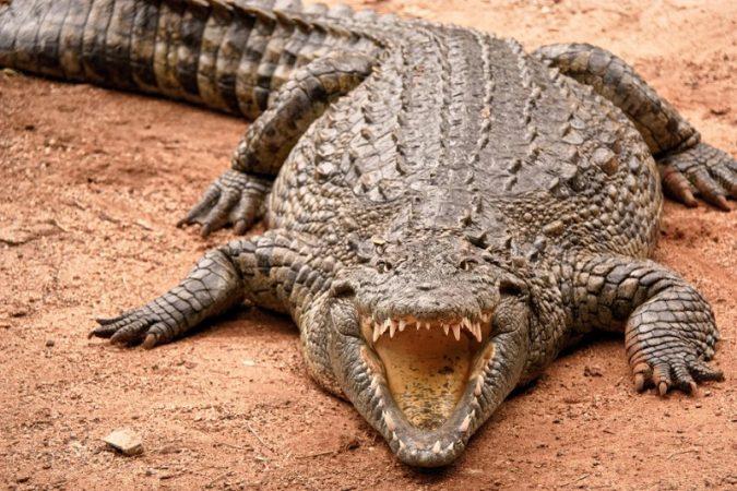 مرگبارترین حیوانات جهان که آروارهای آهنین دارند