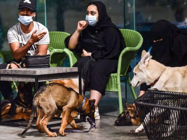 افتتاح اولین کافی شاپ مجاز به ورود سگ ها در عربستان سعودی