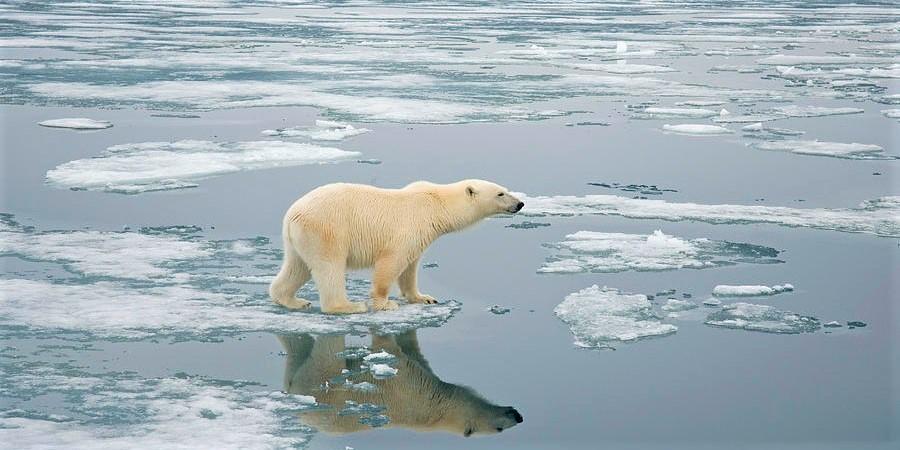 اگر ذوب یخچال های طبیعی زمین ادامه یابد چه اتفاقی خواهد افتاد؟