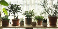 ۱۰ گیاه آپارتمانی برای داشتن خوابی بهتر