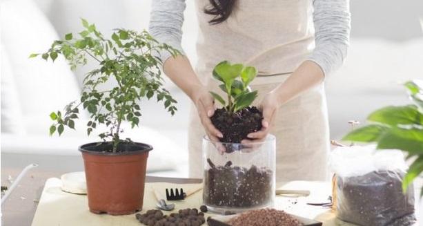 ۷ گیاه آپارتمانی با خواص دارویی را بشناسید