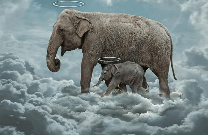 ویدیو و تصاویر دردناک مرگ ایستاده فیل باردار در هند به خاطر خوردن ترقه