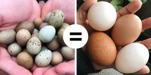 ۱۶ باور غلط اما رایج درباره فواید و مضرات تخم مرغ