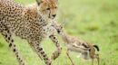 نگاهی به آثار برگزیده مسابقه بین المللی عکس طبیعت و حیات وحش