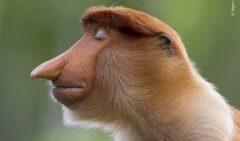 آثار برگزیده مسابقه برترین عکاسان حیات وحش سال ۲۰۲۰