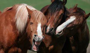 برگزیدگان مسابقه عکس طنز حیوانات خانگی در سال ۲۰۲۰