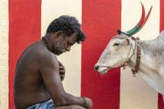 برندگان جوایز عکاسی سونی آلفا در سال ۲۰۲۰ معرفی شدند