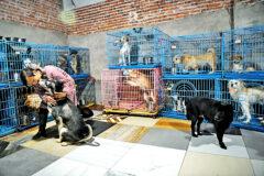 داستان زنی چینی که با ۱,۳۰۰ سگ، ۱۰۰ گربه، ۴ اسب و تعداد زیادی پرنده زندگی میکند