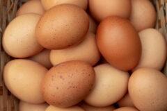 آیا میدانستید تاکنون تخم مرغهای خود را اشتباه نگهداری میکردید؟