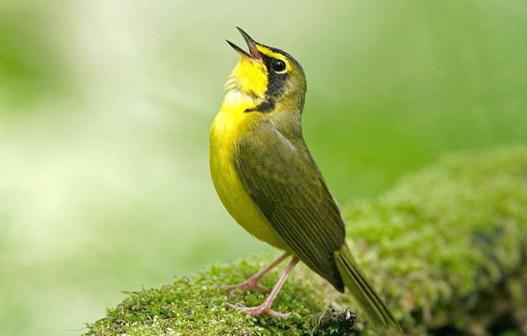 معنای صدای پرندگان از دید امام حسین(ع)