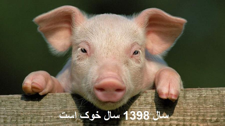 حیوان سال ۹۸ خوک است