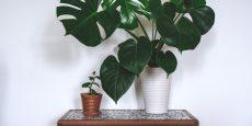 ۱۵ گیاه آپارتمانی سایه دوست که به نور کمی نیاز دارند