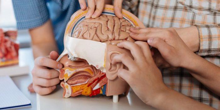 چند واقعیت کمتر شنیده شده اما جالب درباره شگفتی های بدن انسان