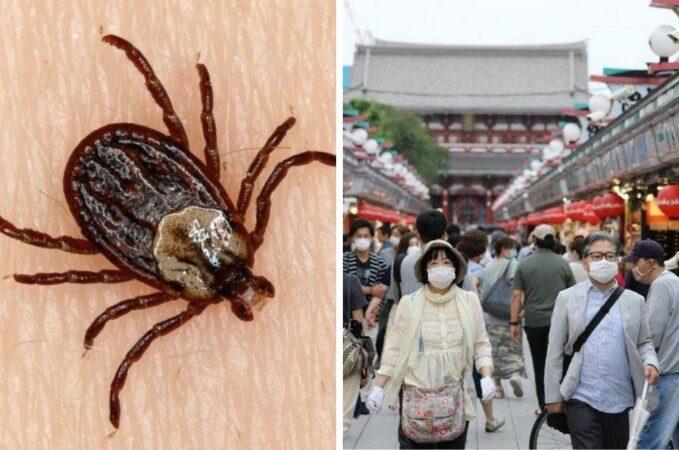 ویروس کنه ای در چین قربانی می گیرد ؛ با این بیماری مرگبار آشنا شوید