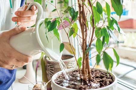 اکسیژن درمانی گیاهی در نبرد با کرونا