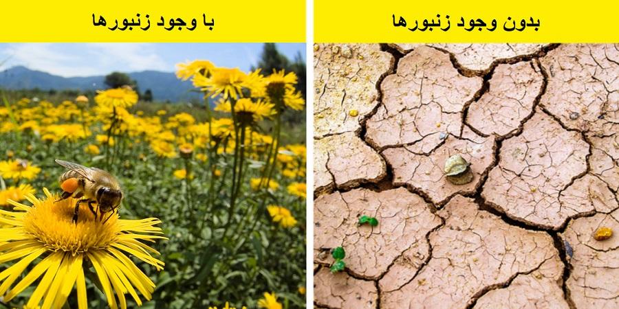 بدون زنبورها نوع بشر از بین خواهد رفت