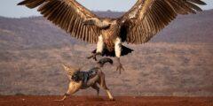 نگاهی به آثار برگزیده مسابقه عکس انجمن سلطنتی حفاظت از پرندگان