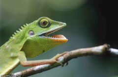 نگاهی به عکسهای زیبای جوایز جهانی عکاسی از طبیعت در سال ۲۰۲۰