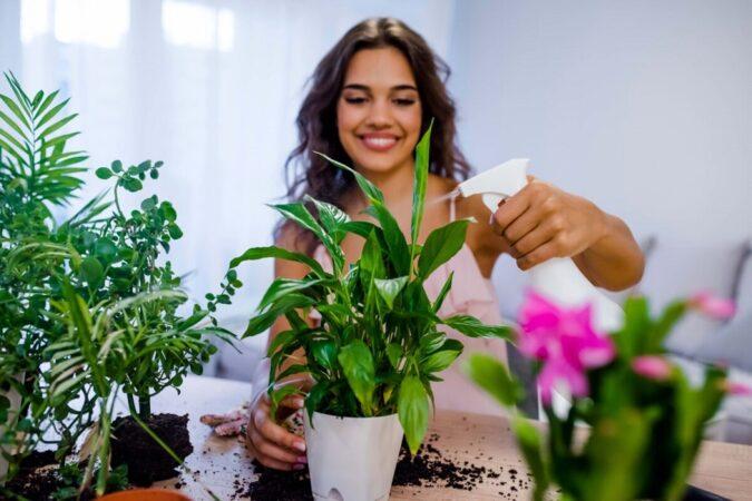 آیا گیاهان آپارتمانی واقعاً هوای خانه را تصفیه می کنند؟